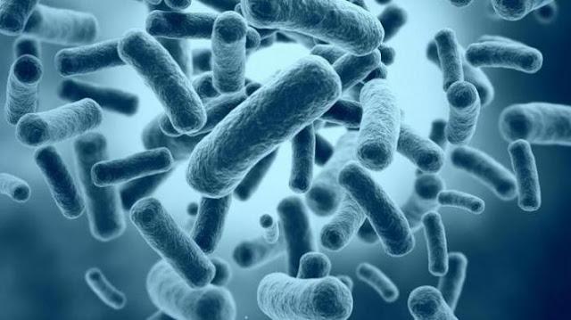 Bakteri Diare