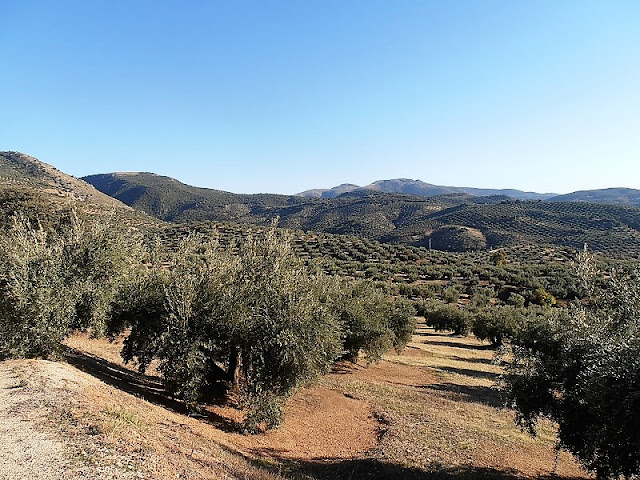Sierra Sur de Jaen, olive groves, Spain