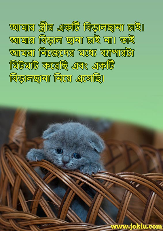 She wanted a kitten short joke in Bengali