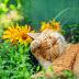 Ήλιος και λουλούδια!...