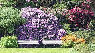 Parkbank mit bunten Blumen im Hintergrund in PLanten un Blomen