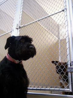 Dog Kennels And Dog Care