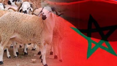 خبير يؤكد المغاربة سيحتفلون هذه السنة بعيد الأضحى في ظروف شبه عادية
