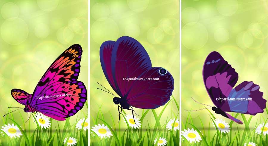 Oráculo: Elige una mariposa y recibe un mensaje espiritual
