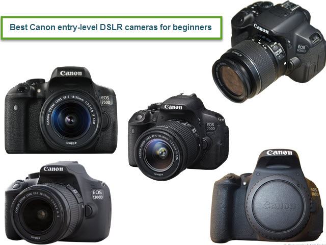 best entry level Canon cameras for beginners