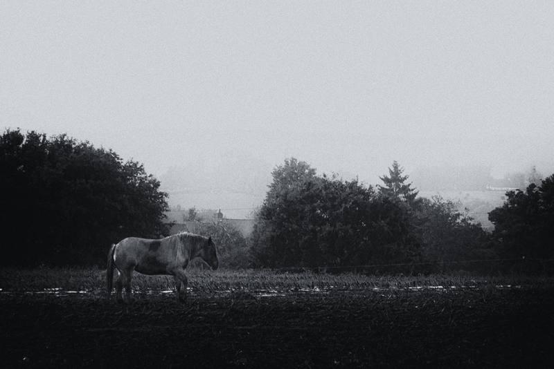 Qu'elle était grise ma campagne... Cheval-trait-breton-petit-matin-brume-guipry-bretagne-paysage-rural-35-musardise%2Bst%2Bjust%2B
