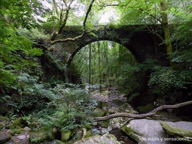 Parque Natural de las Fragas do Eume, el bosque atlántico mejor conservado de Europa