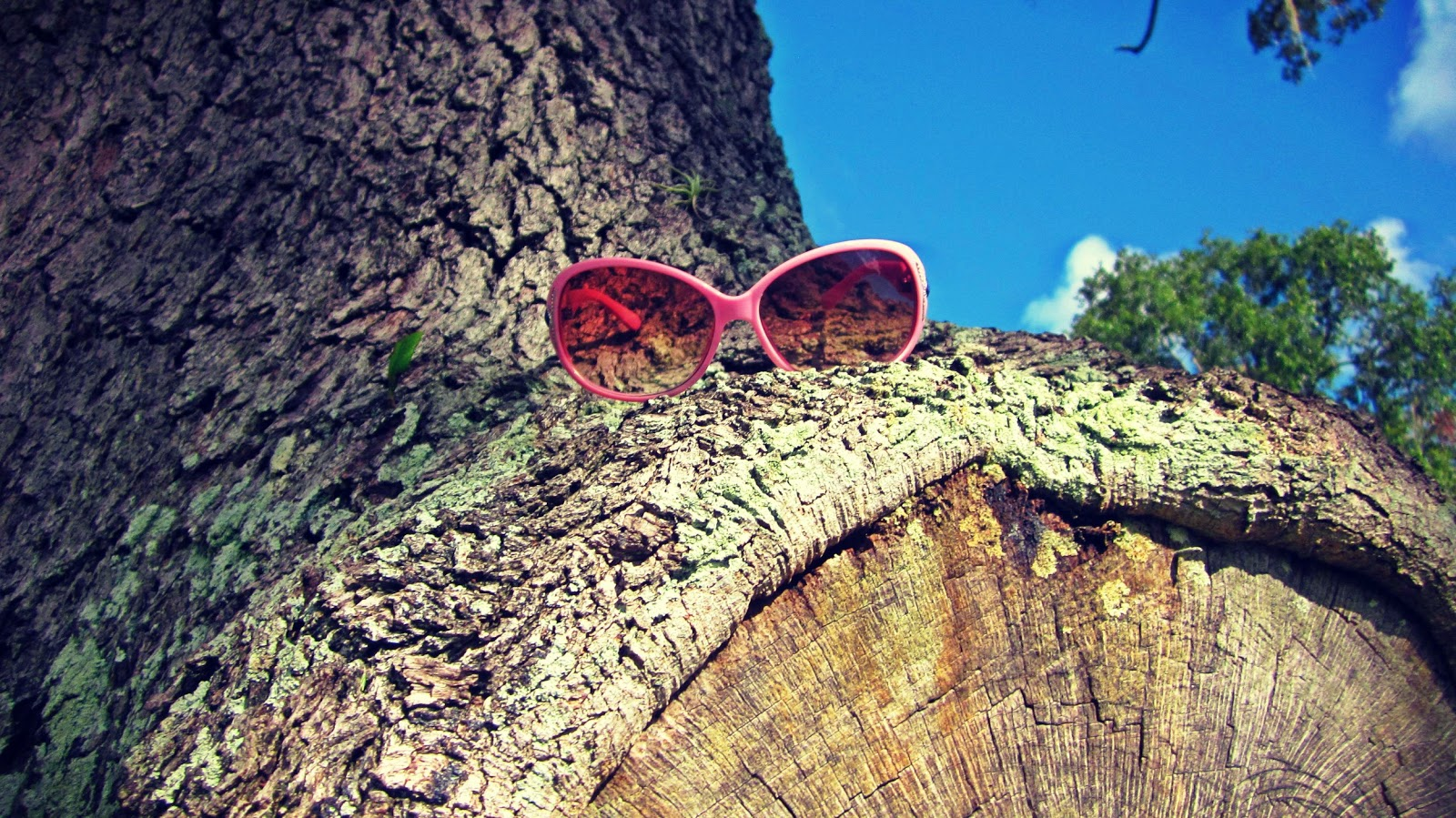 Pink sunglasses up in a tall oak tree against bright blue skies and dotted with summer clouds drifting in Florida