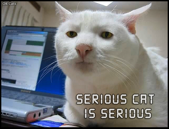 Photoshopped Cat picture • Cat Meme • Serious cat is serious. Internet is a serious job [cat-gifs.com]