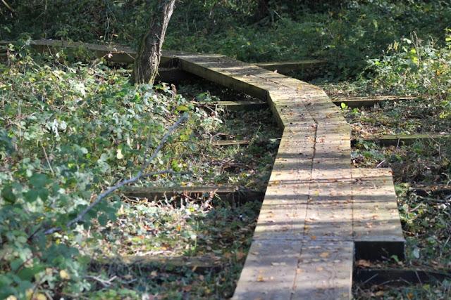 Scohaboy Bog boardwalk