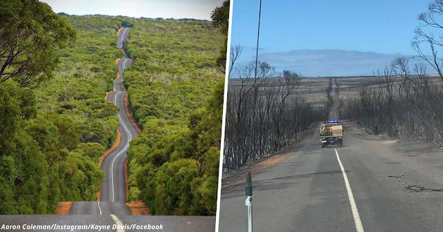 Вот что стало с островом Кенгуру после пожаров в Австралии