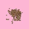 Kacang Suuk