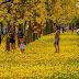 Fotógrafo registra ipês amarelos todos floridos em avenida de Pirassununga