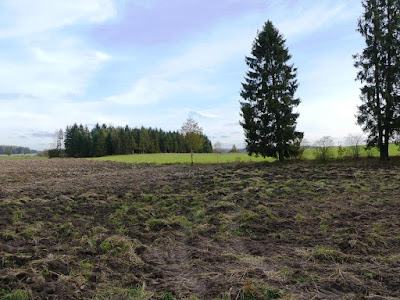 Fields, meadows and forests in Będargowo