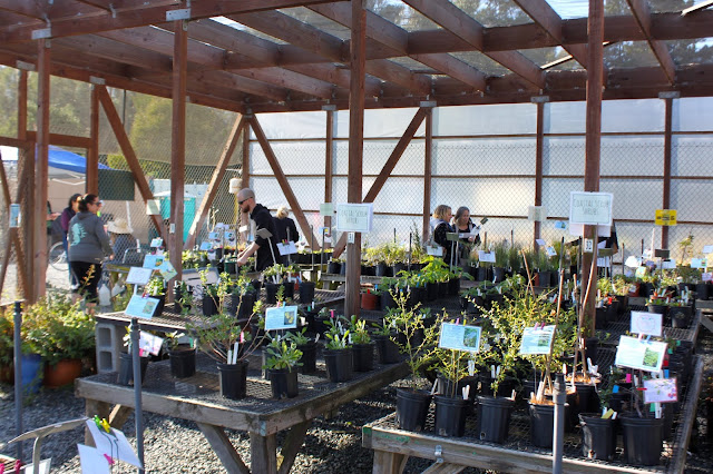 Lots of plants on display for customers during the San Bruno Mountain Watch plant sale