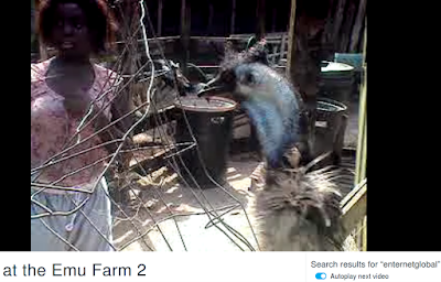 Visiting at the Emu Farm by PeterAppleseed enternetglobal on Vimeo (also on twitter) circa 2010 and distributed 2020 by Milkyy Media Syndicate