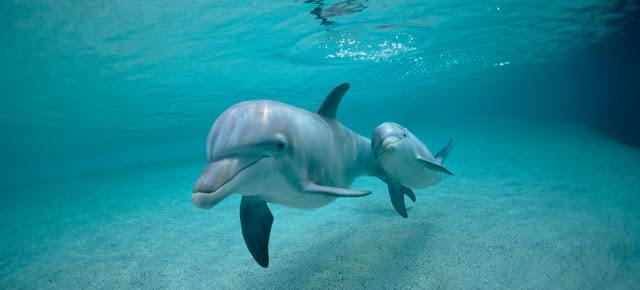 Delfines y buceo