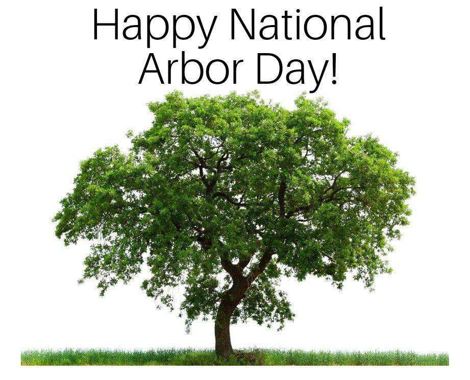 National Arbor Day Wishes Awesome Images, Pictures, Photos, Wallpapers