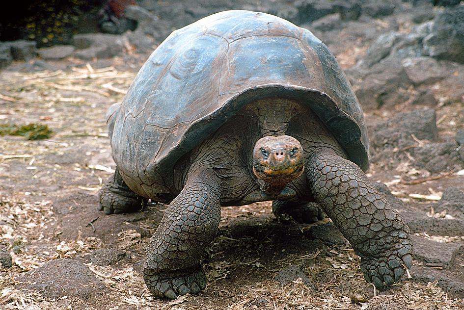 Blog animali le specie di tartarughe for Tartarughe grandi