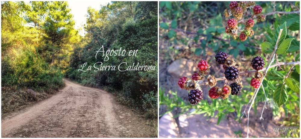 La Calderona y sus moras silvestres
