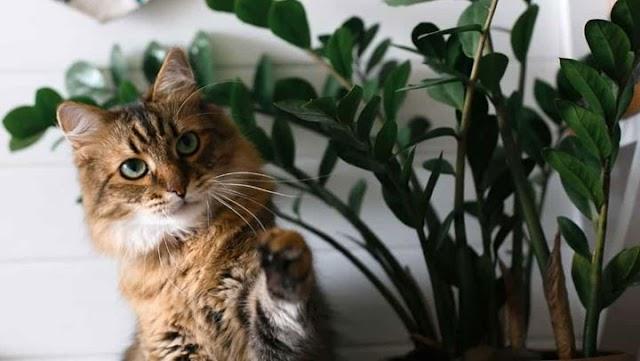 Τα φυτά που είναι επικίνδυνα για τη γάτα σας