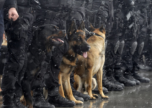 policedogs lined up
