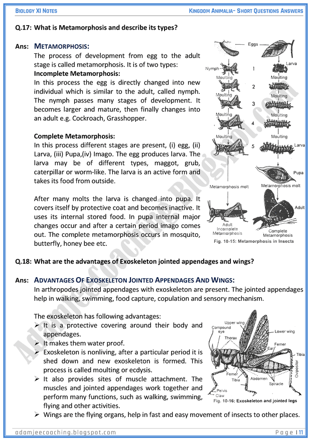 kingdom-animalia-short-question-answers-biology-11th