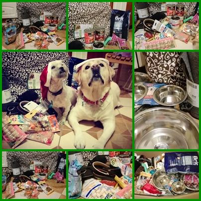 psiolubni, charytatywnie, projekt prezent, pomoc, pomoc dla psów, schronisko, labrador, dom tymczasowy,