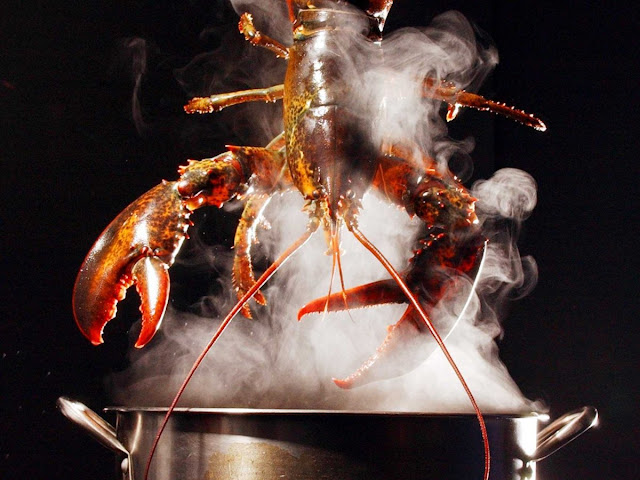 lobster boiling in water