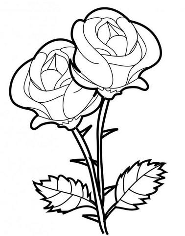 Gambar Kehidupan Gambar Bunga Mawar Hitam Putih