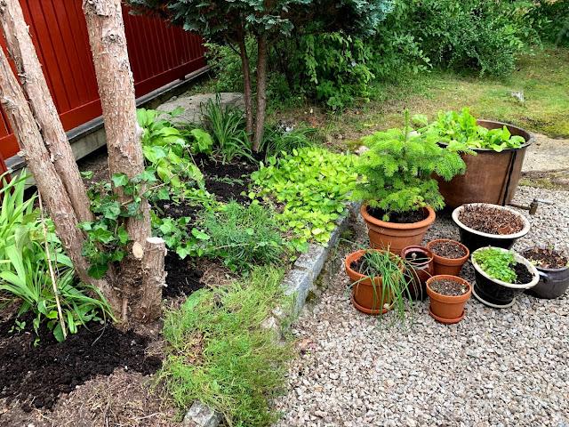 Rufsehagen bak huset lukes og stelles - litt kompost på toppen gjør susen IMG_1637-min