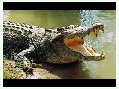 Top-5-Unique-Facts-About-Crocodiles-in-hindi