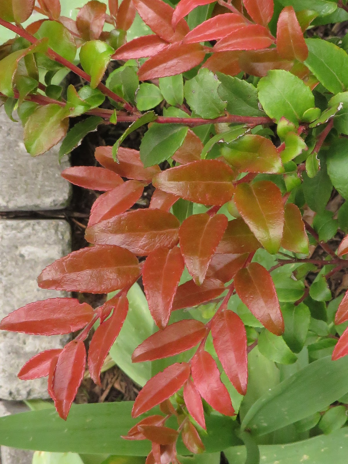 The Evergreens Shade Plants