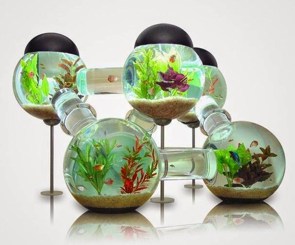 ikan akuarium, harga akuarium, membuat akuarium, akuarium hias, akuarium air tawar, jual akuarium, akuarium ikan hias, ikan hias, akuarium laut, filter akuarium