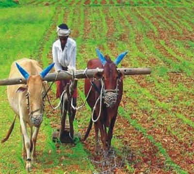 छिंदवाड़ा : किसानों को खरीफ फसलों के लिये सामान्य सलाह, कृषि अनुसंधान केंद्र छिन्दवाड़ा द्वारा दी गई सलाह पढ़े / Chhindwara News