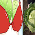 Women Are Putting Cabbage Leaves In Their Chest And The Surprising Result Will Surely Make You Happy