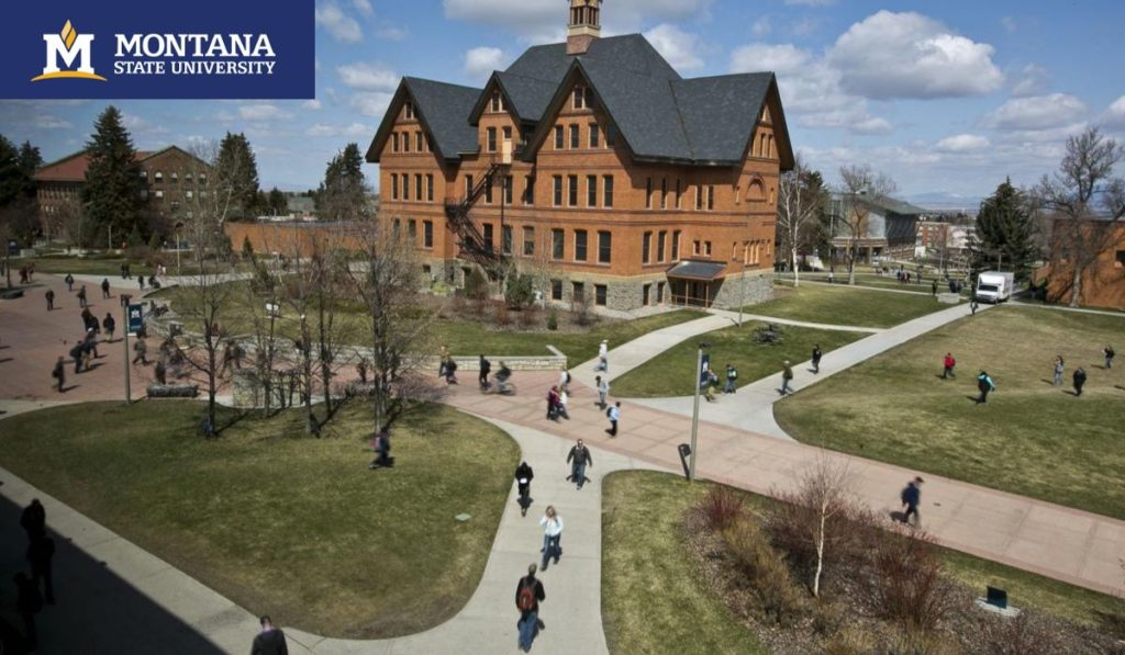 Montana State University International Undergraduate Scholarships 2020