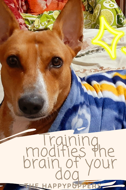 training modifies the brain of dogs