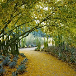 Sunnylands Center & Gardens, plantas de paisajes áridos con carácter escultórico