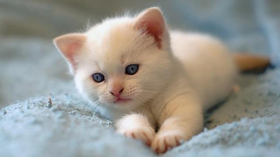 تفسير حلم رؤية قطة في المنام موسوعة المعرفة الشاملة
