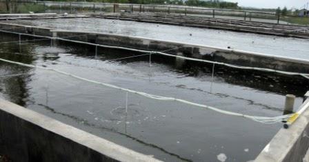 membuat kolam beton untuk budidaya ikan - unrang