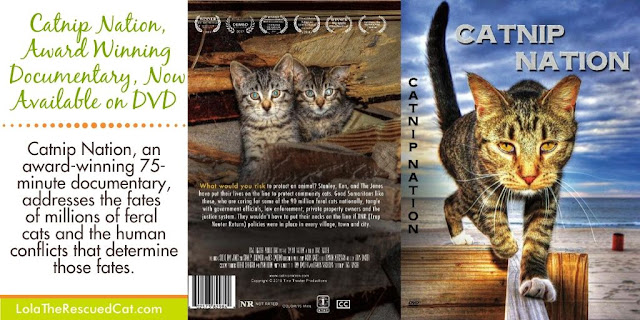 catnip nation dvd