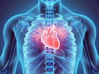 Datos y curiosidades sobre el corazón