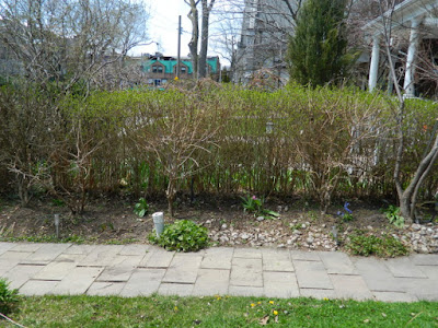 Summerhill Toronto spring garden cleanup after Paul Jung Gardening Services
