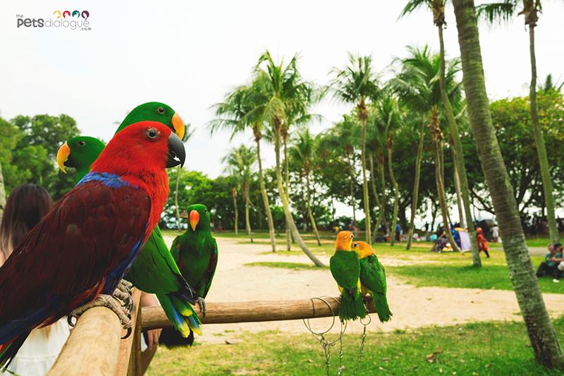 Bird feeding Singapore