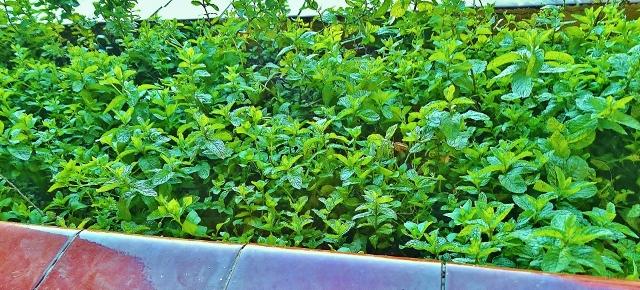 El huerto de jose antonio la hierbabuena - Arriate plantas ...