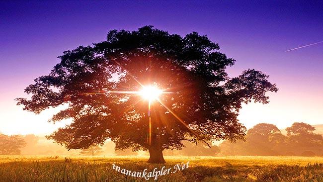 Ey İnsan Görmüyor Musun - www.inanankalpler.net