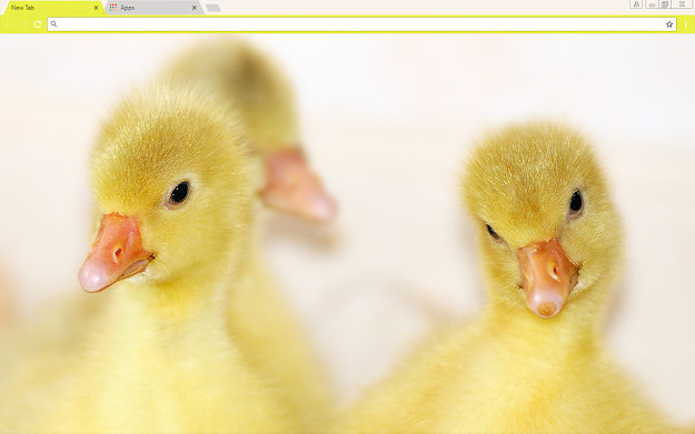 Baby Ducks Google Chrome Theme