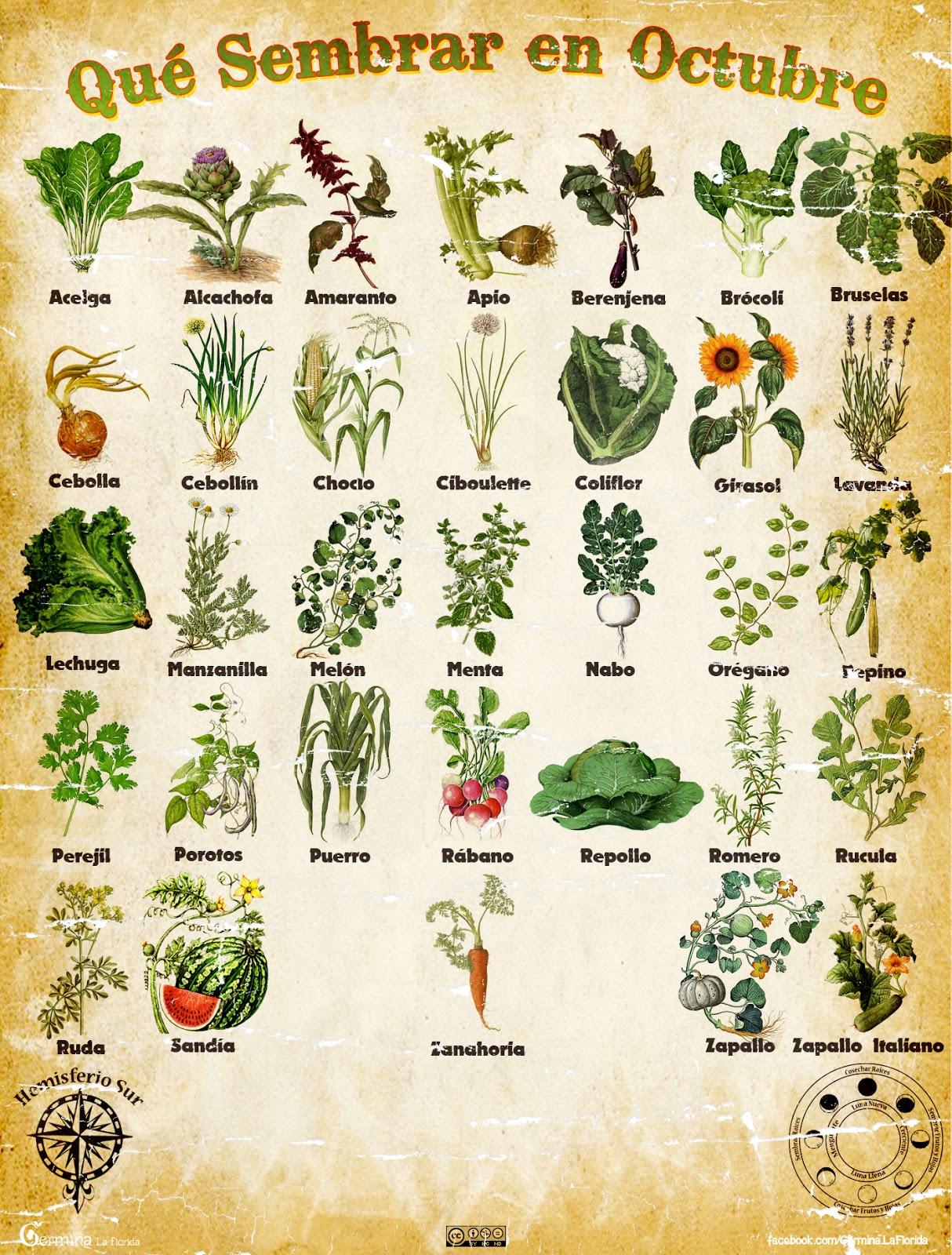 Germina la florida calendario de siembra de octubre for Que plantas se siembran en un huerto