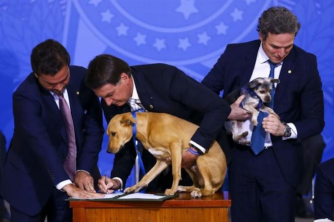 Lei que aumenta punição para maus-tratos a cães e gatos é sancionada